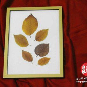 قاب پاییزی درخت نارون